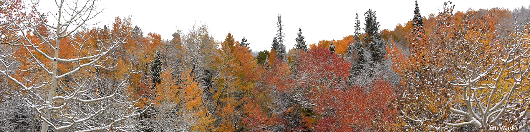 Autumn color snow J Ward f