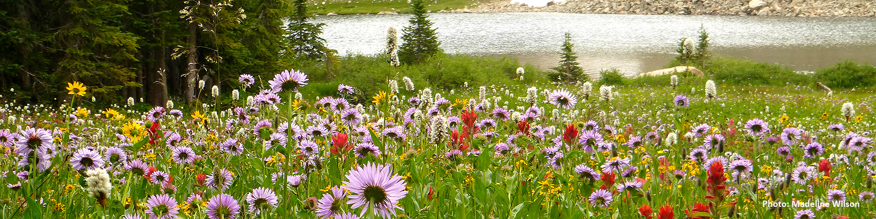 flowers Hutch lake MWilson