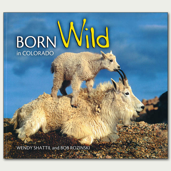 Born Wild in Colorado