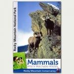 Mammals Wild & Watchable Wildlife